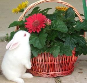 2011.April24.Easter 008