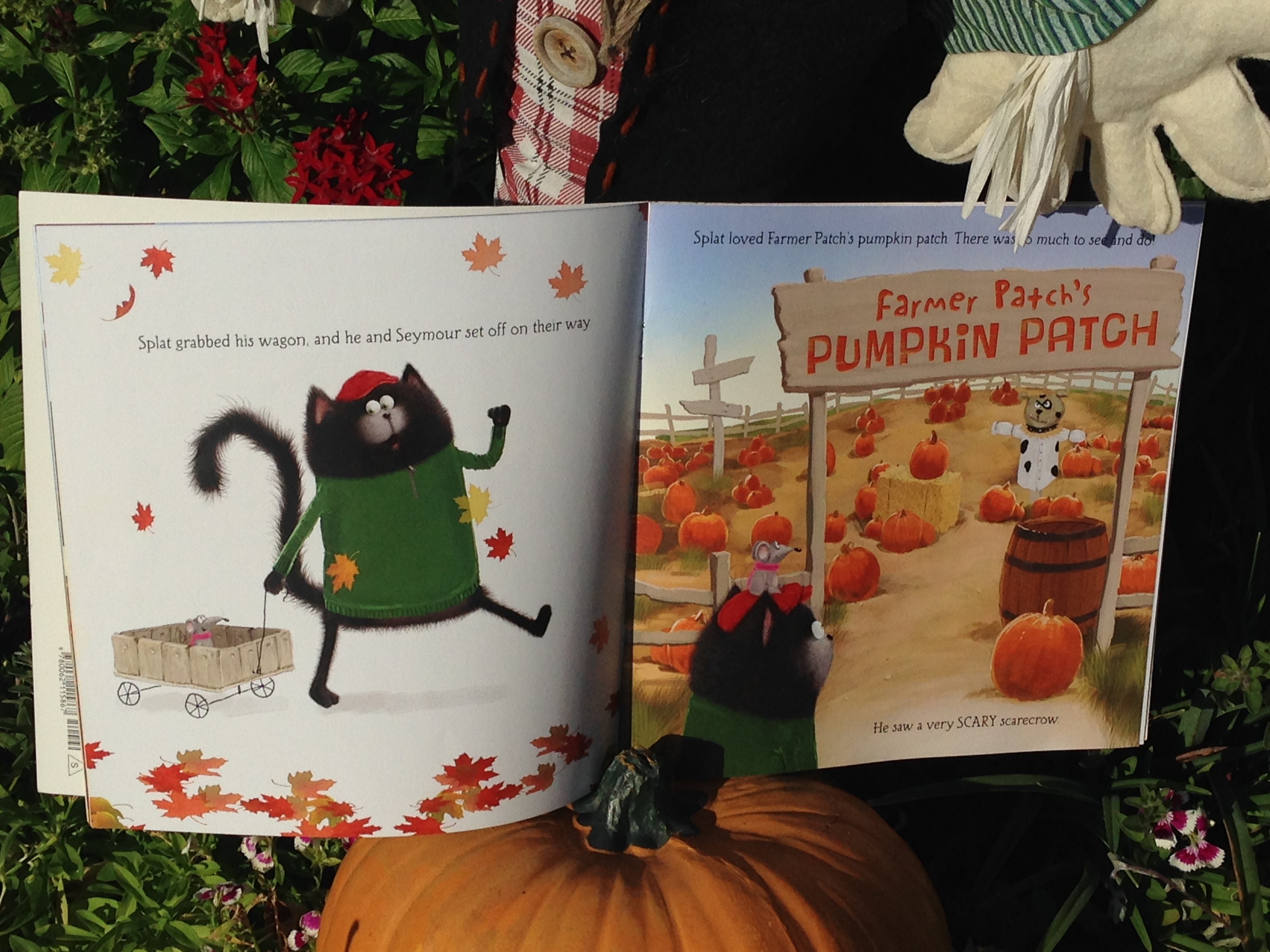 splat the cat and the pumpkinpicking plan �fall is on a