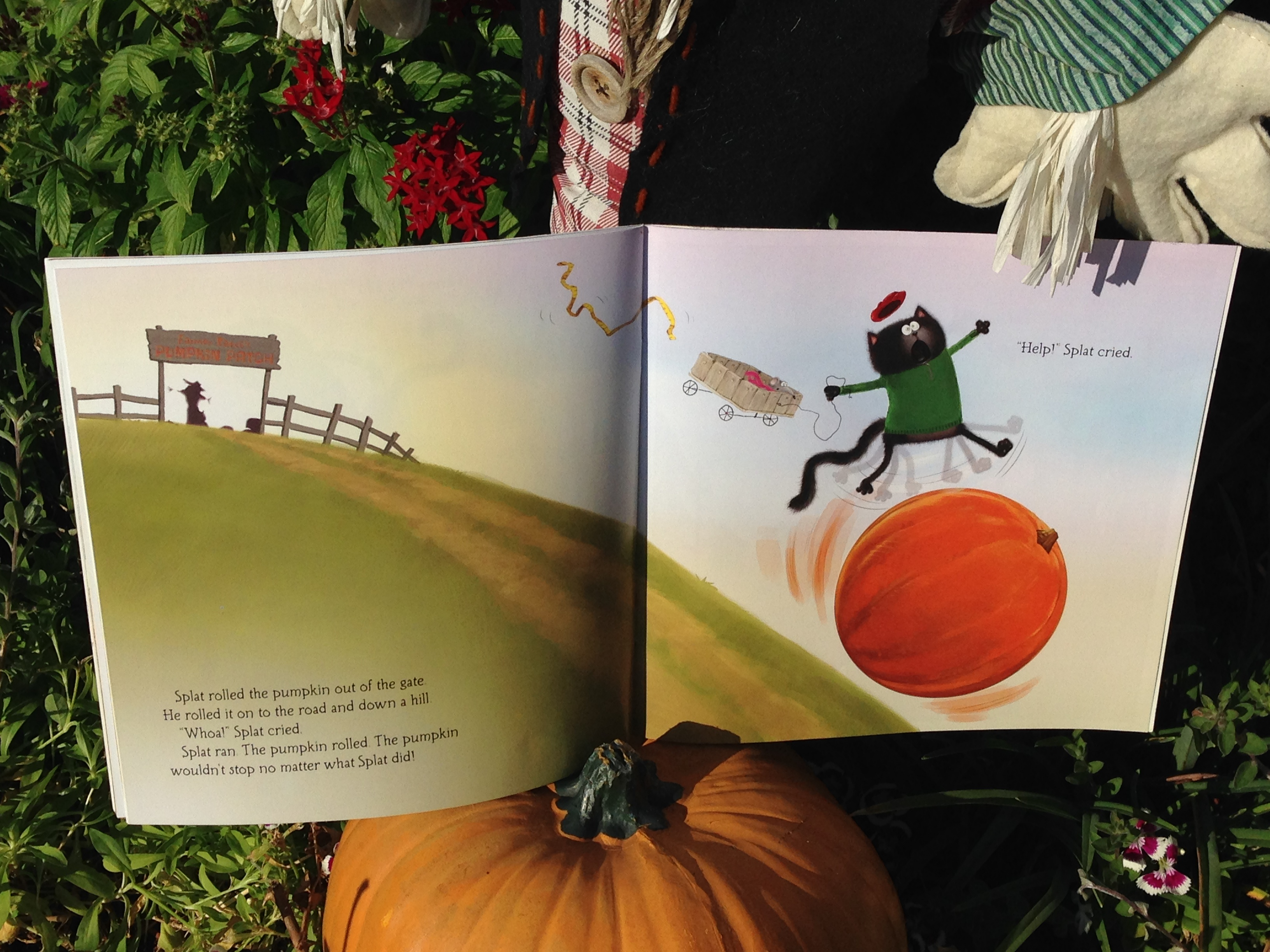 Splat The Cat And The Pumpkin Picking Plan Fall Is On A